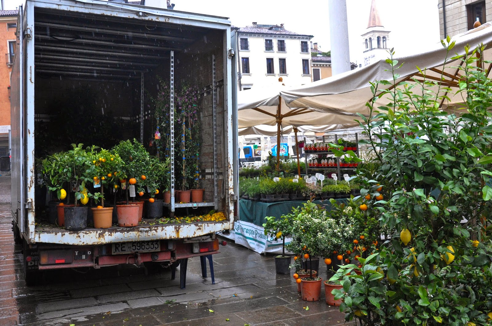 Lorries carrying potted trees and plants, 7th Edition of 'Fiori, colori, e...' - Floriculture market show, Vicenza, Italy