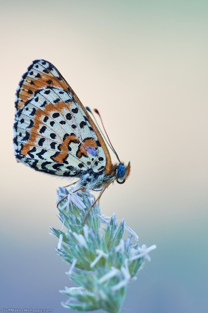 butterfly-photography
