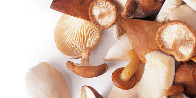 Precautions to Note for mushrooms