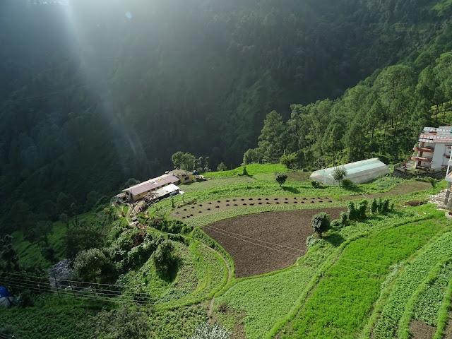 Terrace farming Nainital