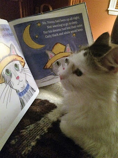 Oliver the cat reading one of his books.