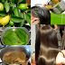 Receita tônico de folhas de goiaba: Controla a queda e acelera o crescimento dos cabelos