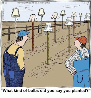 What kind of bulbs did you say you planted?