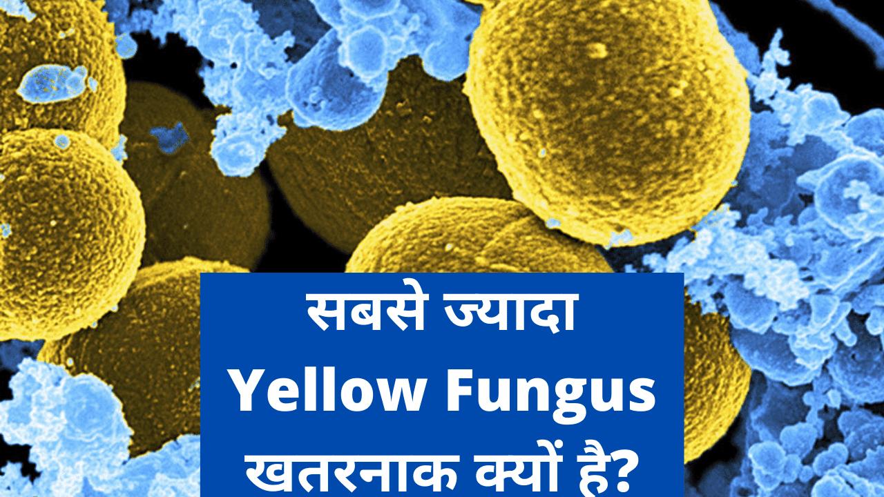 Yellow Fungus Kya Hai | Yellow Fungus के लक्षण | Yellow Fungus कैसे फैलता है?