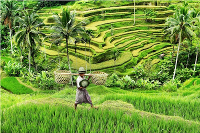 Pesona Indonesia