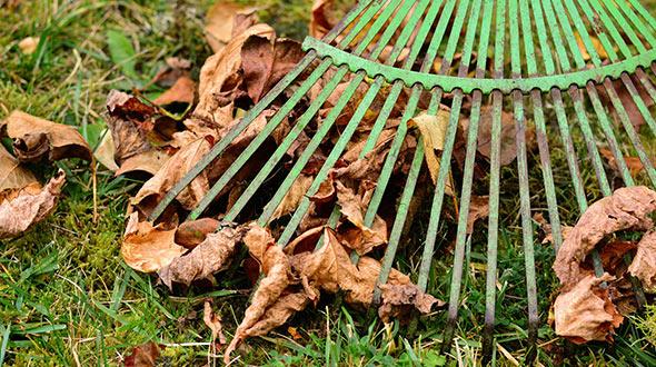 Tree disease treatments include removing fallen diseased leaves
