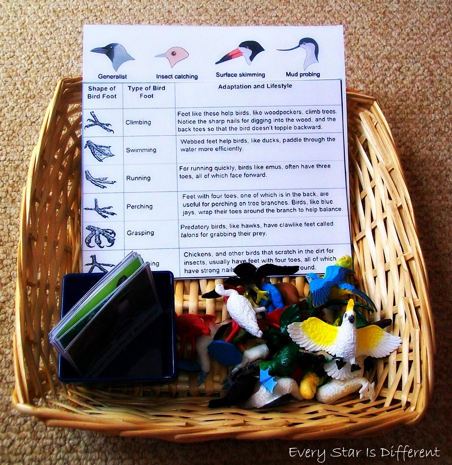 Bird Beak and Bird Feet Identification Activity (Free Printable)