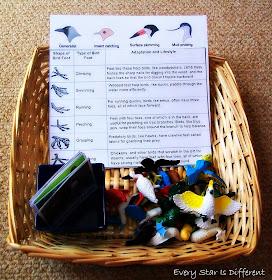 Bird Beak and Bird Feet Identification Activity (Free Printable)