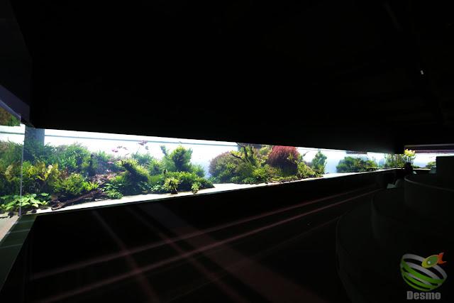 リスボン水族館 『水中の森』