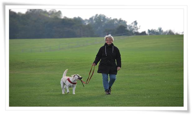 What should I expect from a dog trainer?