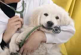 Causa y curación Colitis en perros