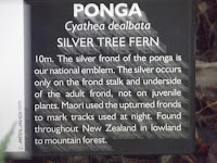 The Silver Tree Fern is a national emblem of New Zealand - Christchurch Botanic Gardens
