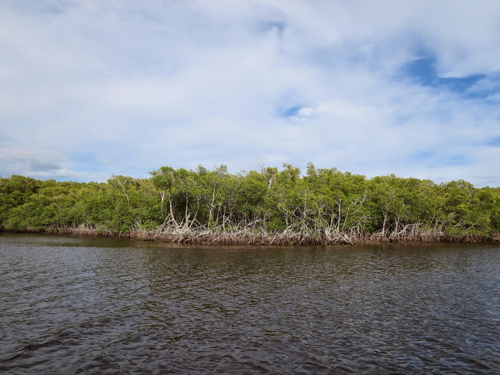 Mangroves near Port of the Islands Marina in Naples, Florida