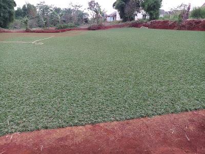 Jual rumput untuk daerah cikarang   tukang rumput Cikarang - Tukang Rumput Bogor