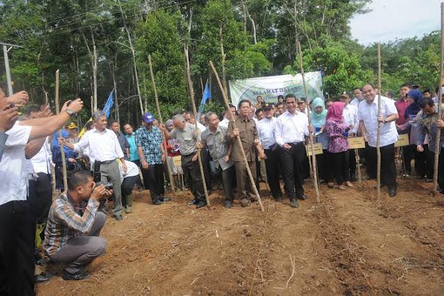 Tahun ini Kementan Tanam 10.000 Ha Jagung di Sumsel