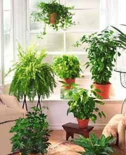 Sala de estar con siete plantas de interior en masetas