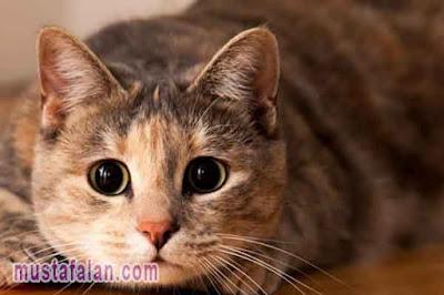hadits tentang menyayangi kucing