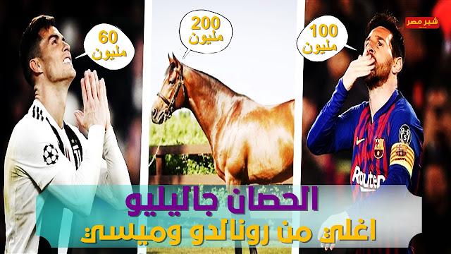 شاهد اغلي حصان فى العالم والذي يقارنه البعض بانه اغلي من رونالدو وميسي - صور الحصان جاليليو