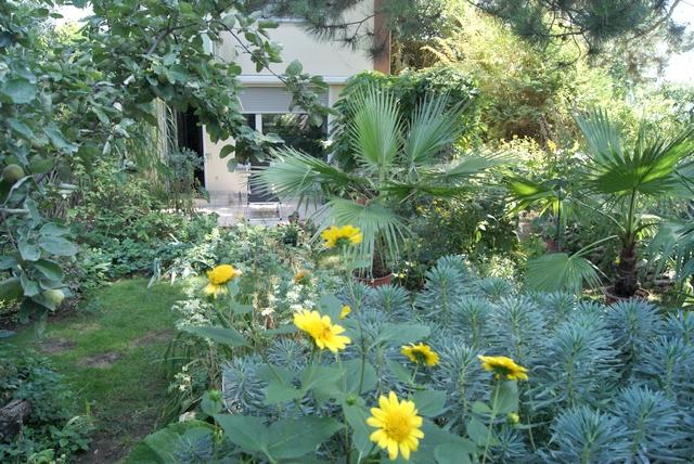 Garten im August mit Staudensonnenblumen und Palisadenwolfsmilch