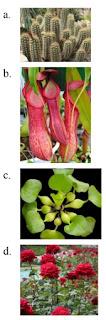 jawaban pilihan tanaman dengan batang berongga