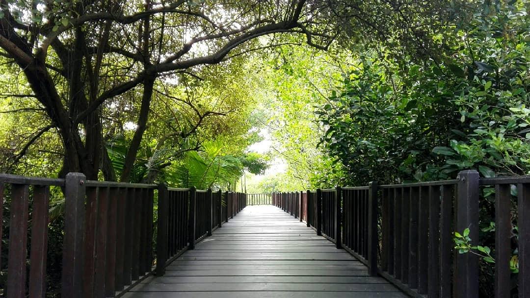Harga Tiket Masuk Hutan Mangrove Wonorejo Rungkut Surabaya Terbaru