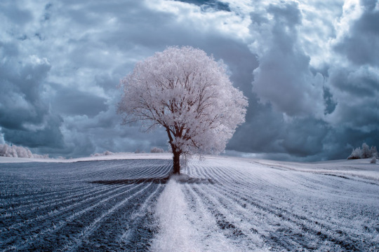 The Majestic Beauty Of Trees Captured In Infrared Photography
