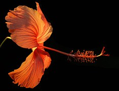 flower-182407__180.jpg