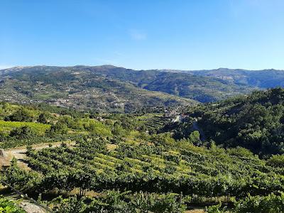paisagem das vinhas na região de Tormes em Baião