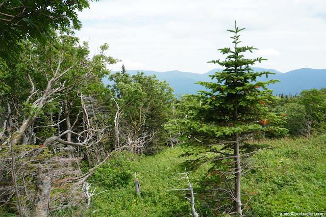 Paisajes en Mount Washington