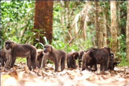 Menelusuri Organisme Endemik di Kawasan Pengamatan Satwa Karaenta