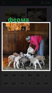 655 слов на ферме работник кормит барашков из ведра 9 уровень