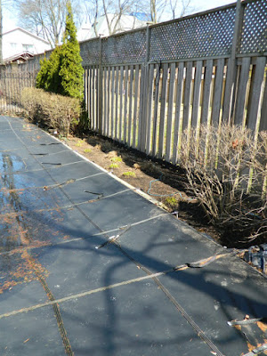 North York Toronto spring garden cleanup after by Paul Jung Gardening Services