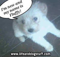 Fluffy the puppy
