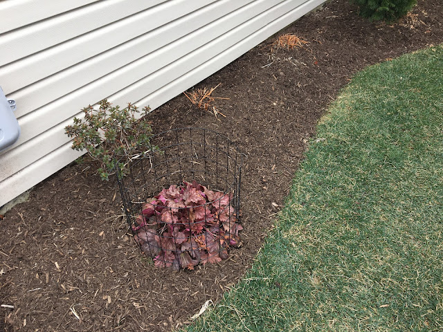 small side yard mulch bed