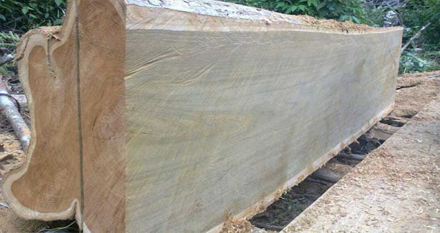 Karakteristik kayu jati rakyat