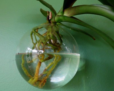 Water Culture Orchid (WCO)