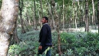 Hutan Mangrove Janggawari