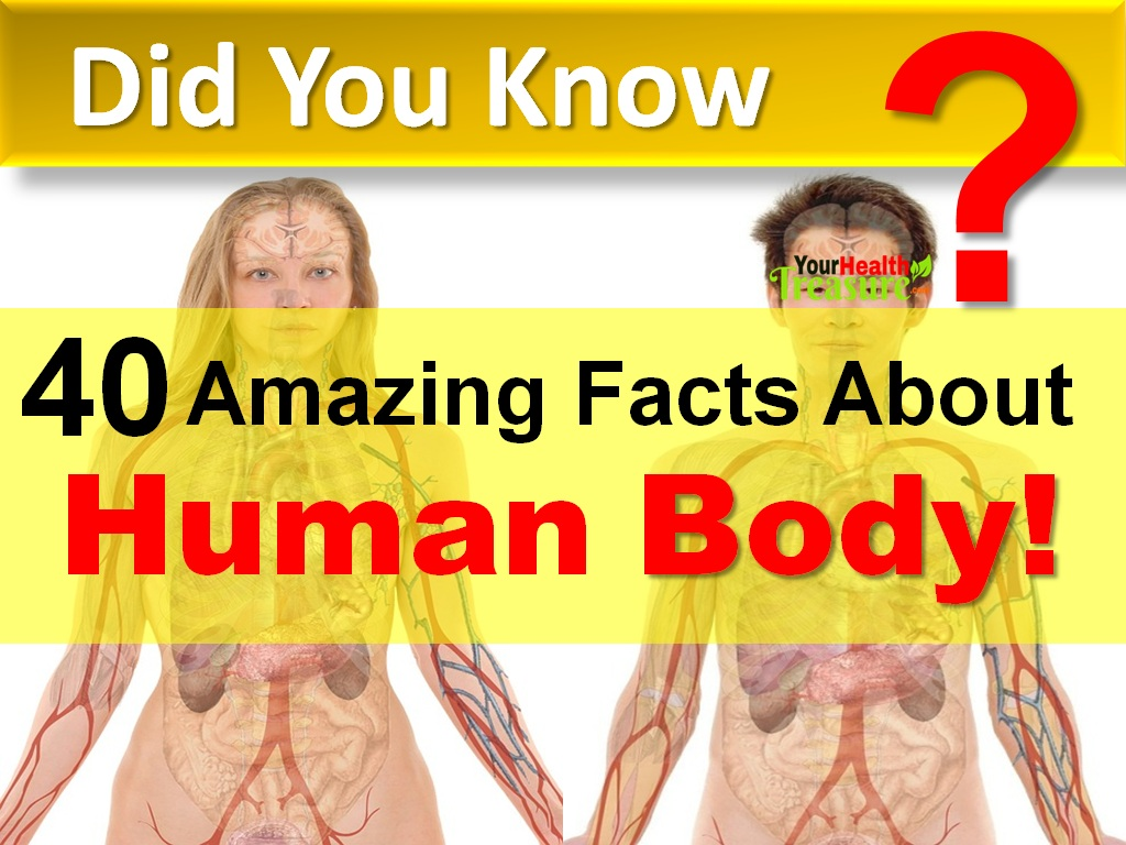 40 Interesting Facts About Human Body - Your Health Treasure
