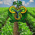 CBN's Commercial Agricultural Credit Scheme Yields 1.1million Jobs In Agricultural Value Chain