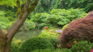 Portland Japanese Garden scene