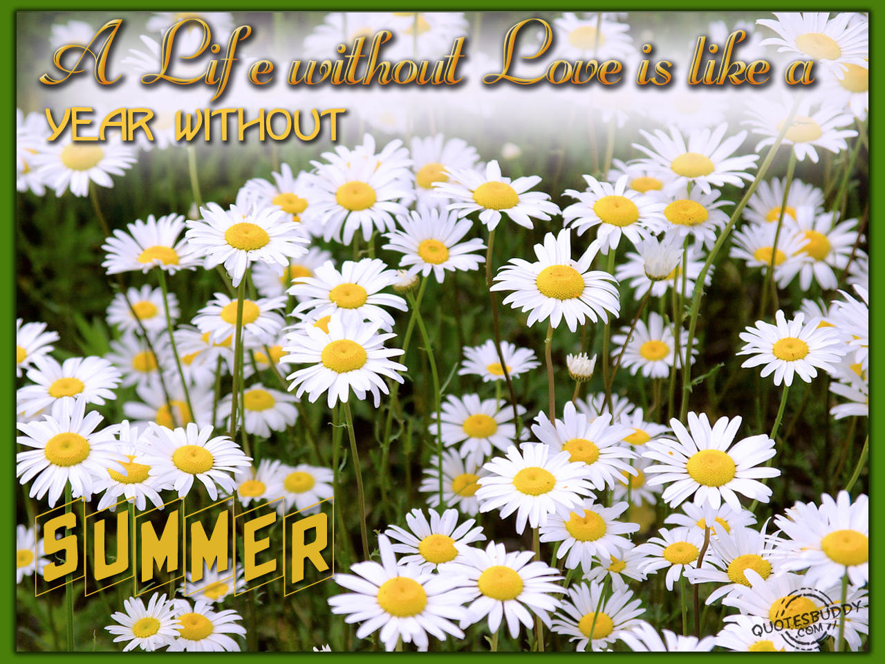 Summer Quotes: Amazing Wallpapers: Summer Quotes, Summer Qoutes, Summer