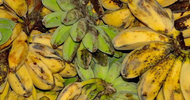 "Six Major Health Benefits Of ""Saging Na Saba"""