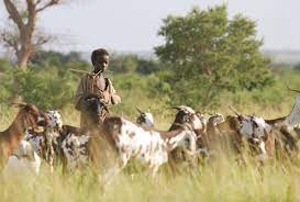 Were nomadic pastoralists certainly a threat to urban life