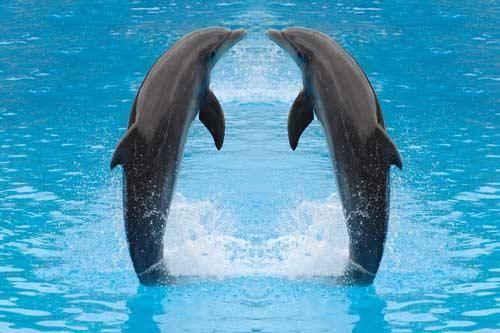 معلومات عن الدلافين ،وأنواعها