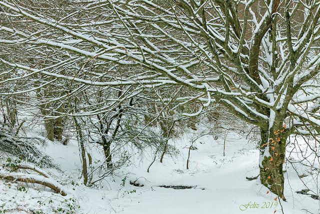 Bosque de hayas nevado