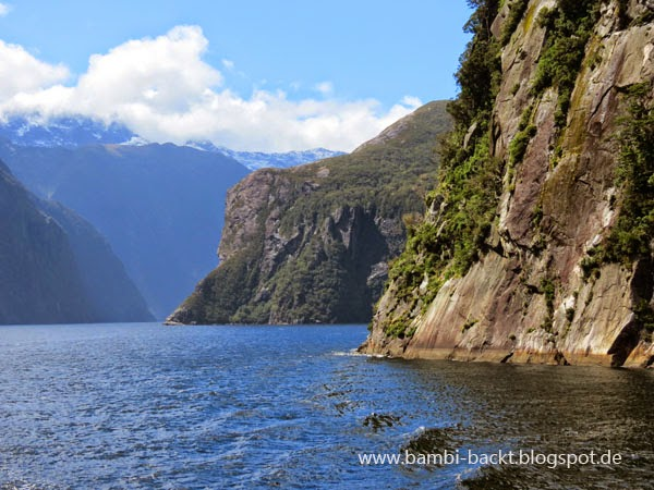 Milford Sound New Zealand | Foodblog rehlein backt
