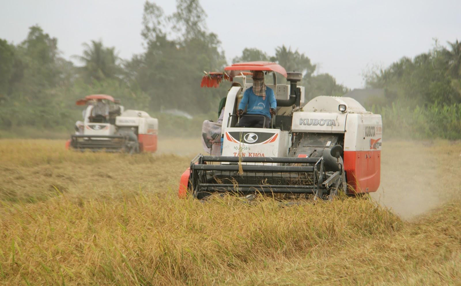 Xuất khẩu gạo sang EU đòi hỏi phải đảm bảo các tiêu chuẩn trong trồng, chăm sóc, thu hoạch và bảo quản lúa gạo. Trong ảnh: Thu hoạch lúa ở Cần Thơ. Ảnh: Huỳnh Xây.