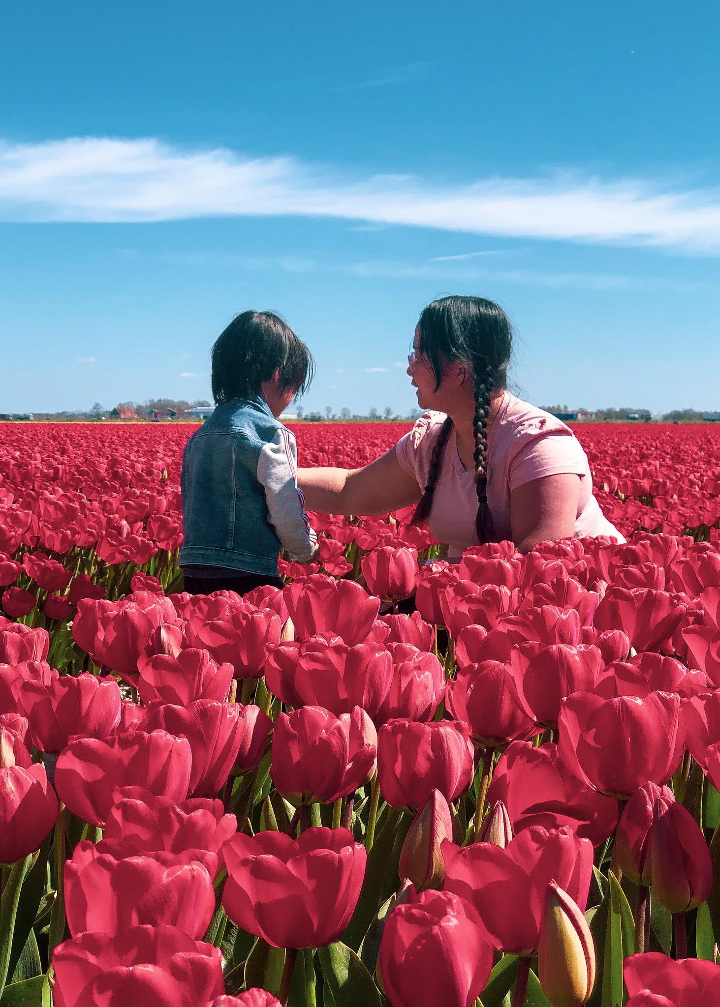 Be Carol Tulip Fields Spring Netherlands