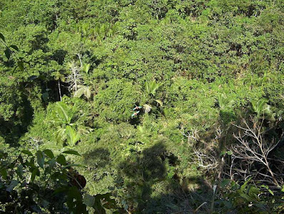 Madidi_National_Park,most_dangerous_tourist_destinations_in_the_world_most_dangerous_tourist_places_in_the_world