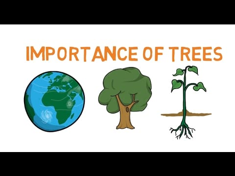 10 Lines on Importance of Trees in English | Few Important Lines on Importance of Trees in English